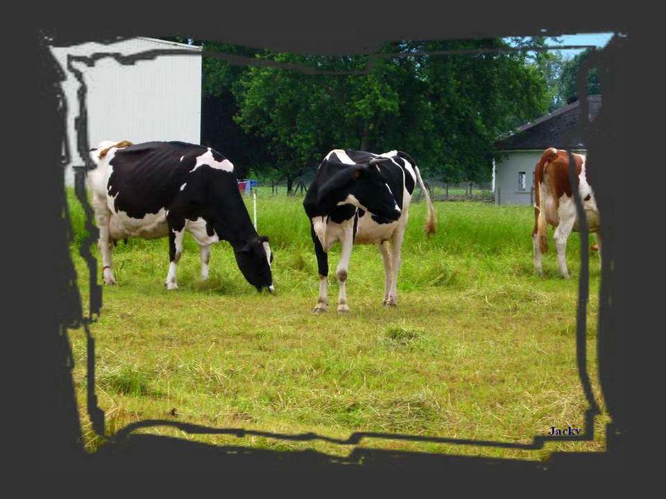 Là se rendaient toutes les vaches du village, là les attendaient un homme pittoresque, entre deux âges, et tenant à la main une corne, une corne de vache, qu'il avait manifestement transformée en trompe.
