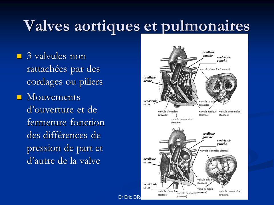 Dr Eric DRAI 2008 Valves aortiques et pulmonaires 3 valvules non rattachées par des cordages ou piliers 3 valvules non rattachées par des cordages ou
