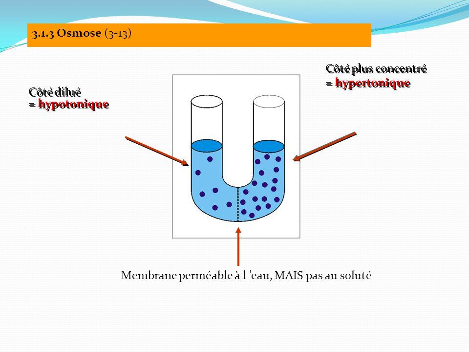 3.1.3 Osmose (3-13) Côté dilué = hypotonique Côté dilué = hypotonique Côté plus concentré = hypertonique Côté plus concentré = hypertonique Membrane perméable à l 'eau, MAIS pas au soluté