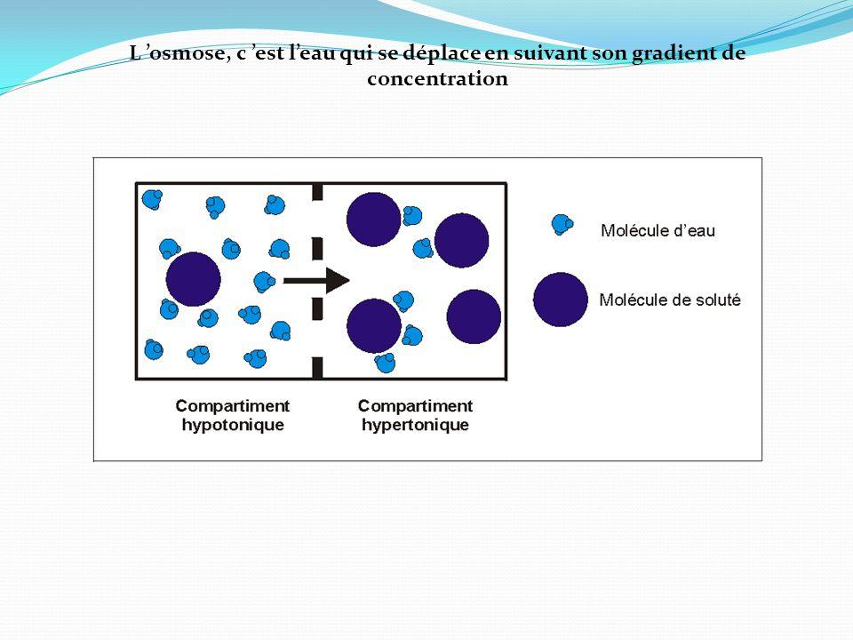 L 'osmose, c 'est l'eau qui se déplace en suivant son gradient de concentration
