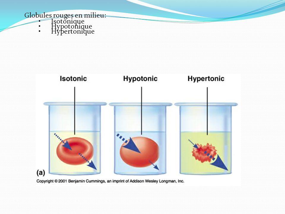 Globules rouges en milieu: Isotonique Hypotonique Hypertonique