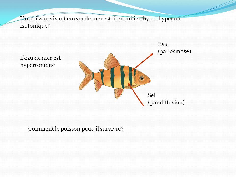 Un poisson vivant en eau de mer est-il en milieu hypo, hyper ou isotonique.