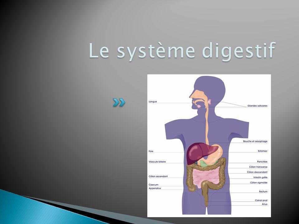  La digestion est le phénomène durant lequel les aliments sont transformés pour obtenir des monomères (molécules simplifiées) qui seront ensuite absorbés par le sang.