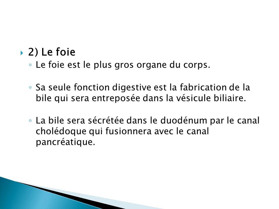  2) Le foie ◦ Le foie est le plus gros organe du corps.