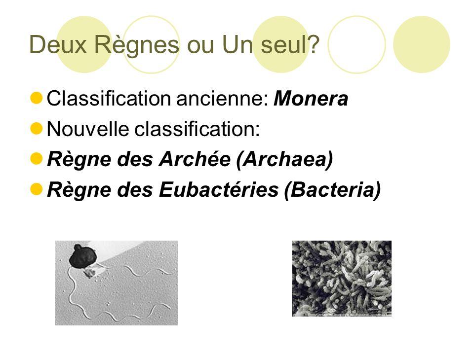Caracteristiques des Eubactéries : Prokaryote: Paroi cellulaire faite de peptoglycane (antibiotique)