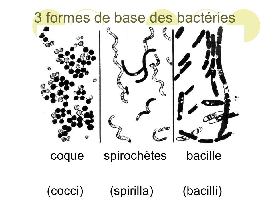 Les Archées  Ces bactéries sont expertes des environnements hostiles.