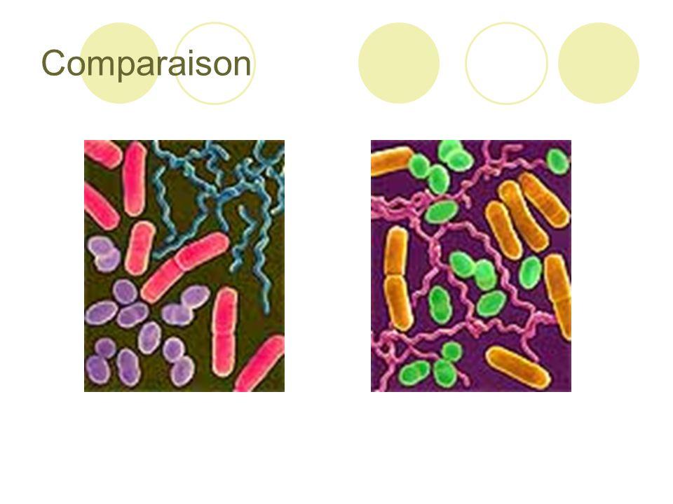 Utiles ou Dangereuses.Bactéries utiles  Décomposition  Fixation de l'azote  Digestion ( E.