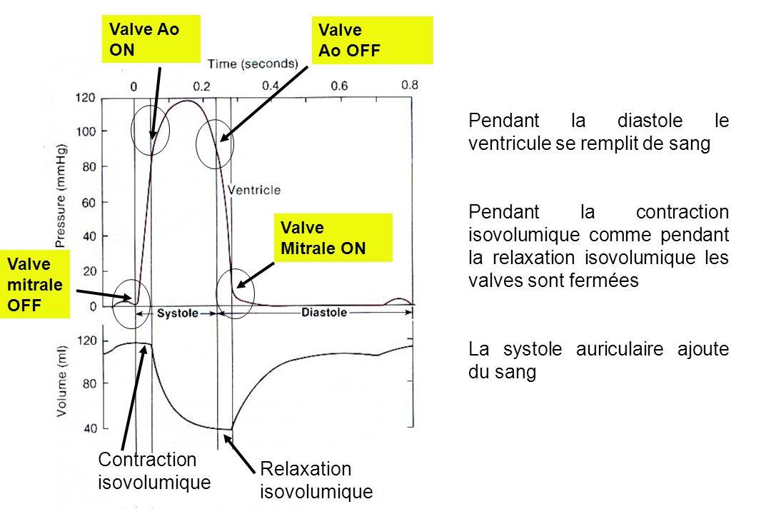 Pendant la diastole le ventricule se remplit de sang Pendant la contraction isovolumique comme pendant la relaxation isovolumique les valves sont fermées La systole auriculaire ajoute du sang Relaxation isovolumique Contraction isovolumique Valve Ao ON Valve Ao OFF Valve mitrale OFF Valve Mitrale ON