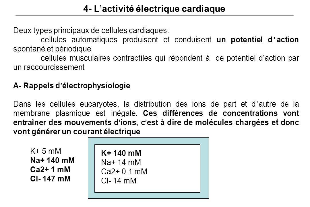 4- L'activité électrique cardiaque Deux types principaux de cellules cardiaques: cellules automatiques produisent et conduisent un potentiel d'action spontané et périodique cellules musculaires contractiles qui répondent à ce potentiel d'action par un raccourcissement A- Rappels d'électrophysiologie Dans les cellules eucaryotes, la distribution des ions de part et d'autre de la membrane plasmique est inégale.