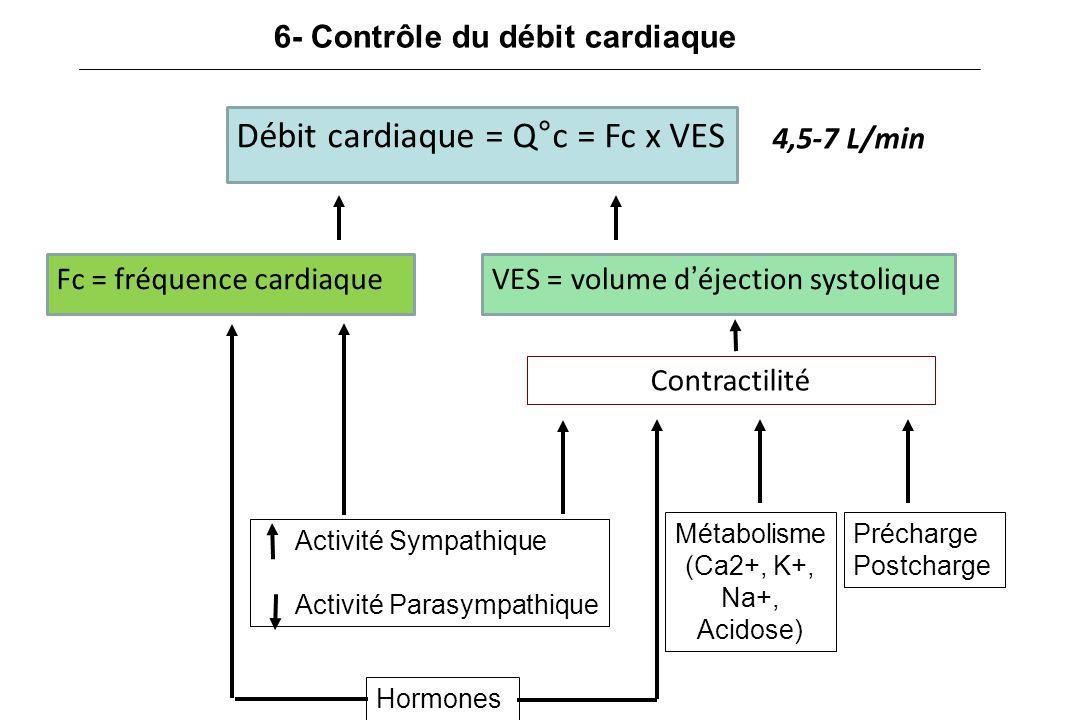 6- Contrôle du débit cardiaque Débit cardiaque = Q°c = Fc x VES Fc = fréquence cardiaqueVES = volume d'éjection systolique 4,5-7 L/min Précharge Postcharge Hormones Activité Sympathique Activité Parasympathique Contractilité Métabolisme (Ca2+, K+, Na+, Acidose)