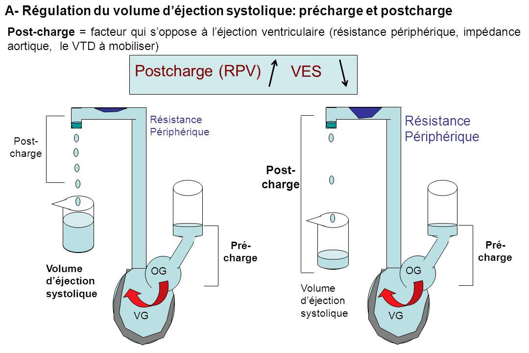 Post-charge = facteur qui s'oppose à l'éjection ventriculaire (résistance périphérique, impédance aortique, le VTD à mobiliser) A- Régulation du volume d'éjection systolique: précharge et postcharge Postcharge (RPV) VES Post- charge Pré- charge Volume d'éjection systolique OG VG Résistance Périphérique Post- charge Pré- charge Volume d'éjection systolique OG VG Résistance Périphérique