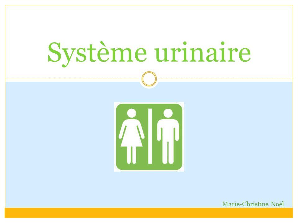 Système urinaire Marie-Christine Noël