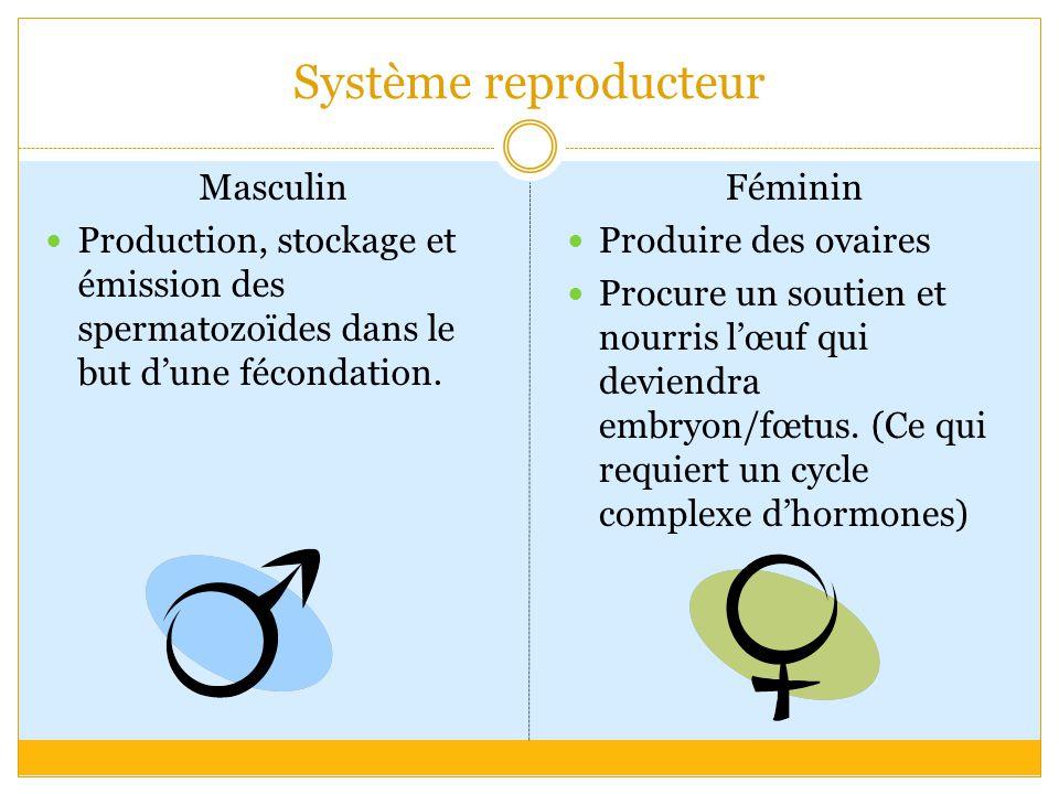 Système reproducteur Masculin Production, stockage et émission des spermatozoïdes dans le but d'une fécondation.