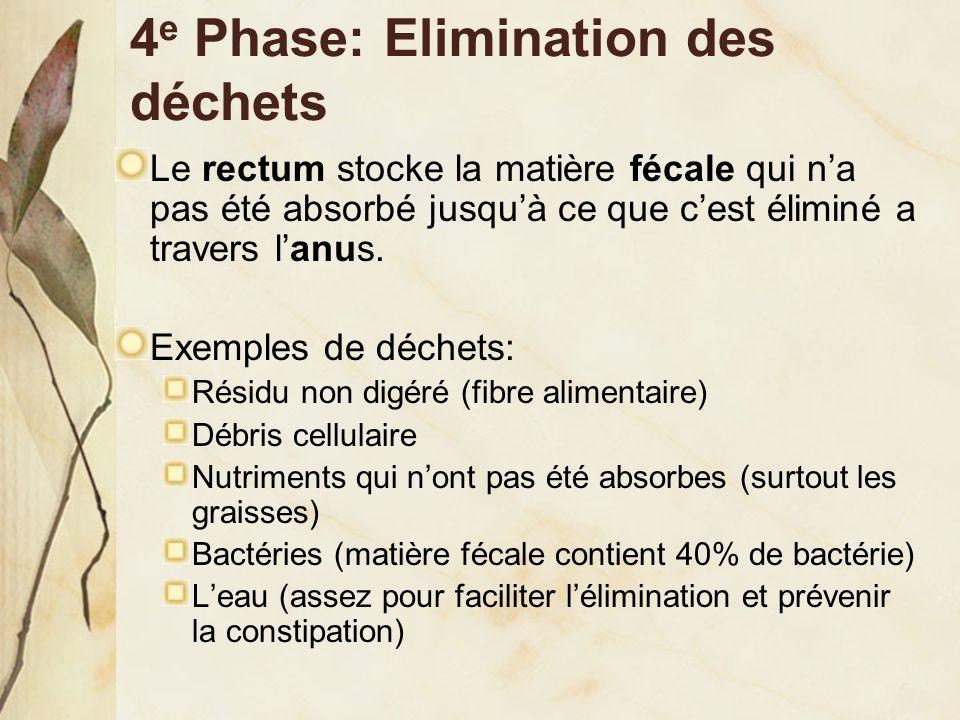 4 e Phase: Elimination des déchets Le rectum stocke la matière fécale qui n'a pas été absorbé jusqu'à ce que c'est éliminé a travers l'anus. Exemples