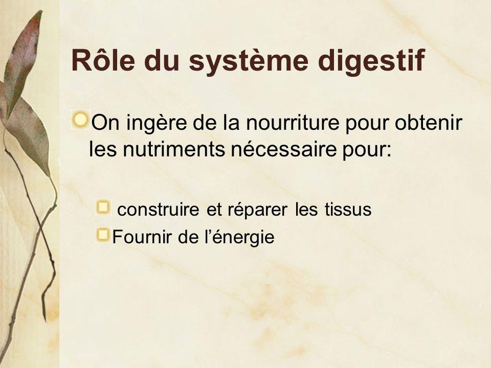 Rôle du système digestif On ingère de la nourriture pour obtenir les nutriments nécessaire pour: construire et réparer les tissus Fournir de l'énergie