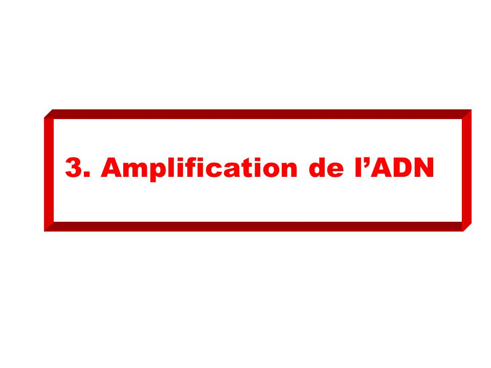3. Amplification de l'ADN