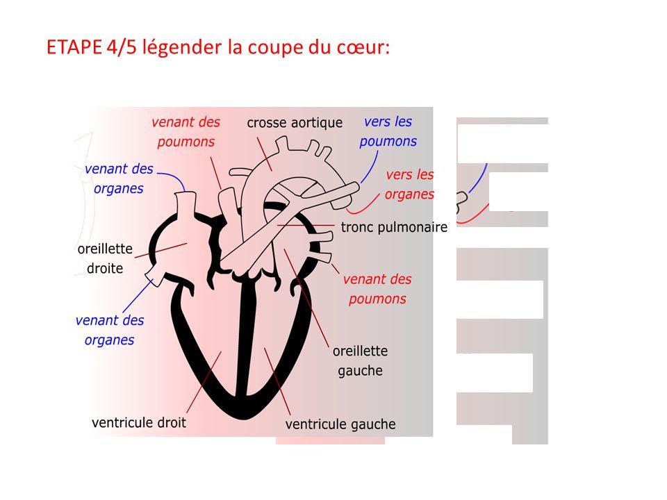 ETAPE 5/5 Dessiner les vaisseaux sanguins avec les couleurs ETAPE 2/5 Mettez le rythme entre 9/10 puis entre 150/160.