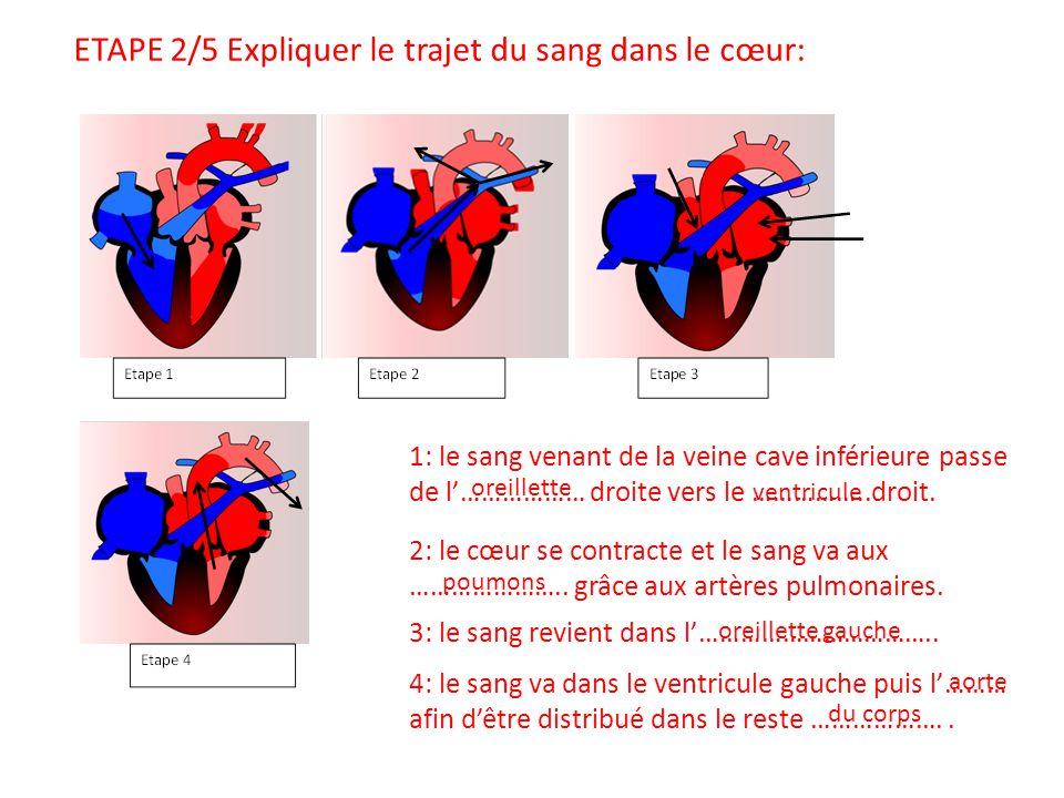 1: le sang venant de la veine cave inférieure passe de l'……………… droite vers le ……………..droit. 4: le sang va dans le ventricule gauche puis l'……… afin d