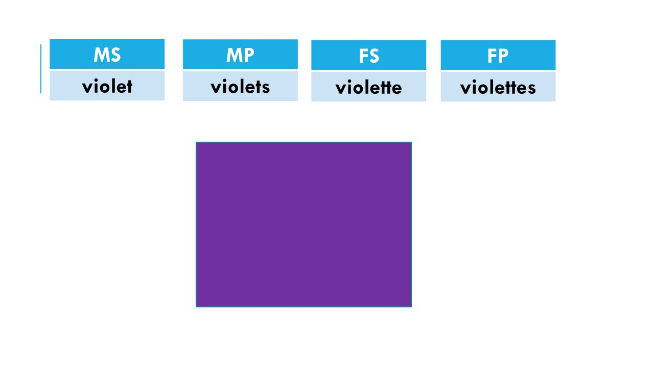 MS violet FP violettes FS violette MP violets