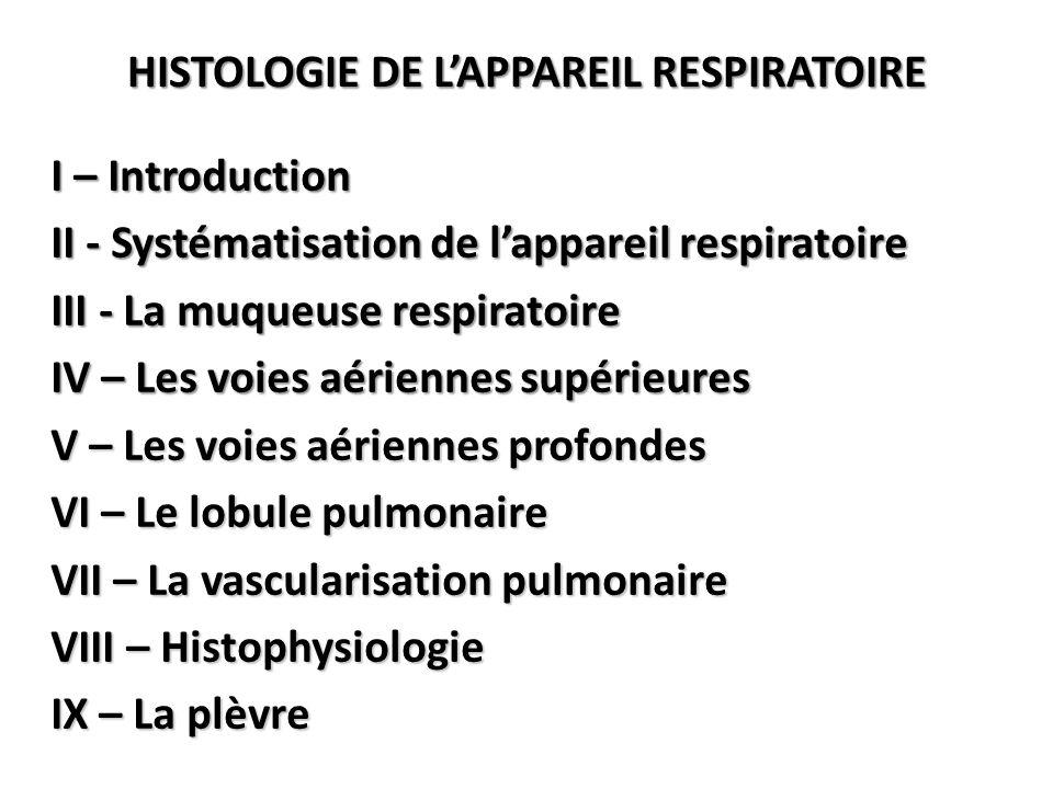 VI – Le lobule pulmonaire 3 – Acinus et canal alvéolaire = unité respiratoire Structure histologique de la cloison inter-alvéolaire 5 à 15 µm d'épaisseur b – Les alvéoles Réseau conjonctif interstitiel Capillaires sanguins Epithélium pavimenteux Pores de KOHN 1 à 12 µm Ø Macrophages alvéolaires