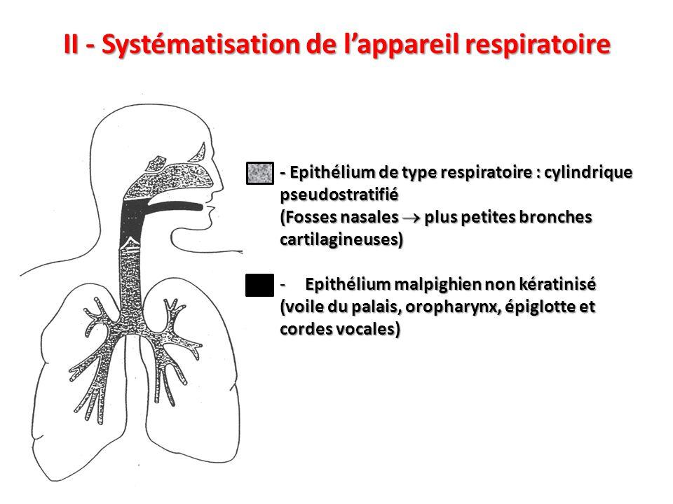 III - La muqueuse respiratoire B – Fonctions 1 - Epuration de l'air inspiré : rôle du tapis roulant muco-ciliaire (  pharynx, 20 mm/min): -Phase profonde fluide occupant la hauteur des cils -Phase superficielle épaisse gluante Dyskinésies ciliaires primitives (cils immobiles) Infections naso-sinusiennes précoces et bronchiques conduisant à une dilatation des bronches 2 – Humidification et réchauffement de l'air inspiré 3 - Défense immunitaire (BALT)