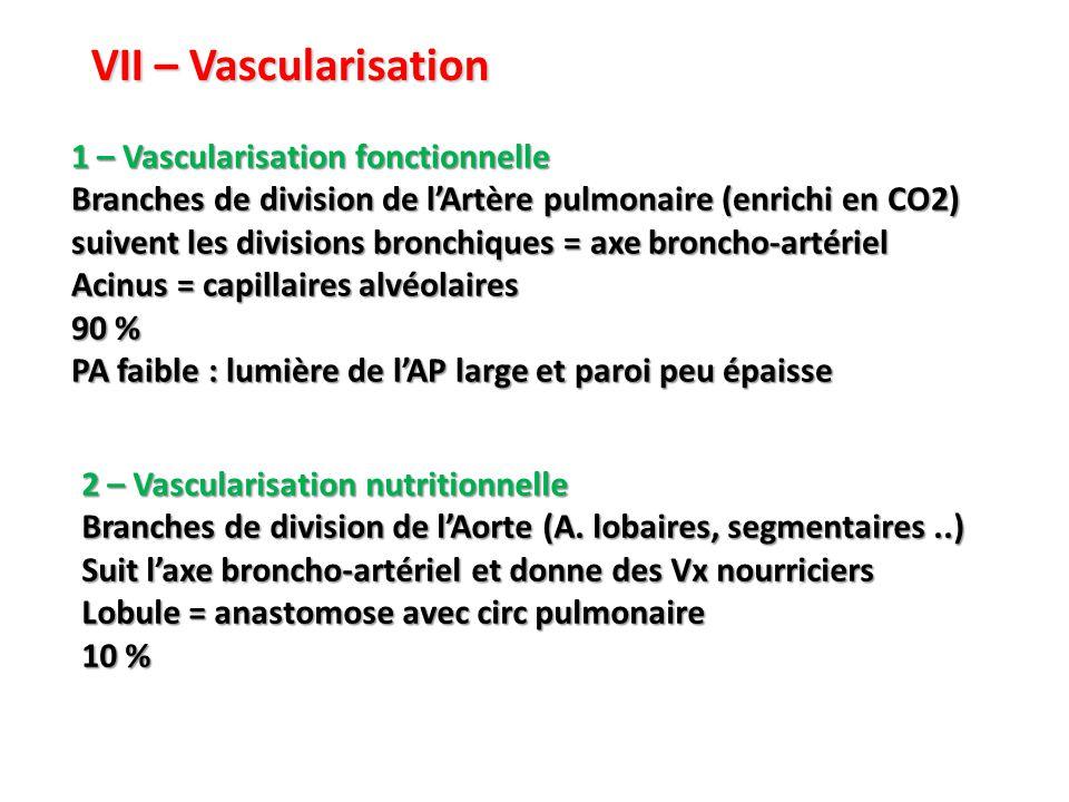 VII – Vascularisation 1 – Vascularisation fonctionnelle Branches de division de l'Artère pulmonaire (enrichi en CO2) suivent les divisions bronchiques = axe broncho-artériel Acinus = capillaires alvéolaires 90 % PA faible : lumière de l'AP large et paroi peu épaisse 2 – Vascularisation nutritionnelle Branches de division de l'Aorte (A.