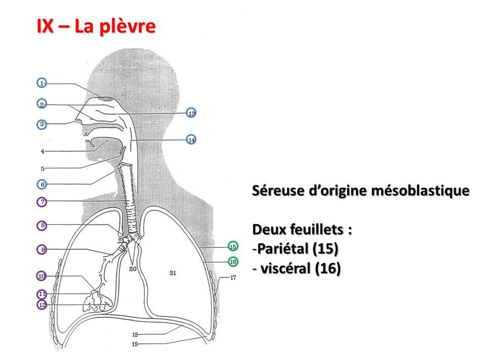 IX – La plèvre Séreuse d'origine mésoblastique Deux feuillets : -Pariétal (15) - viscéral (16)