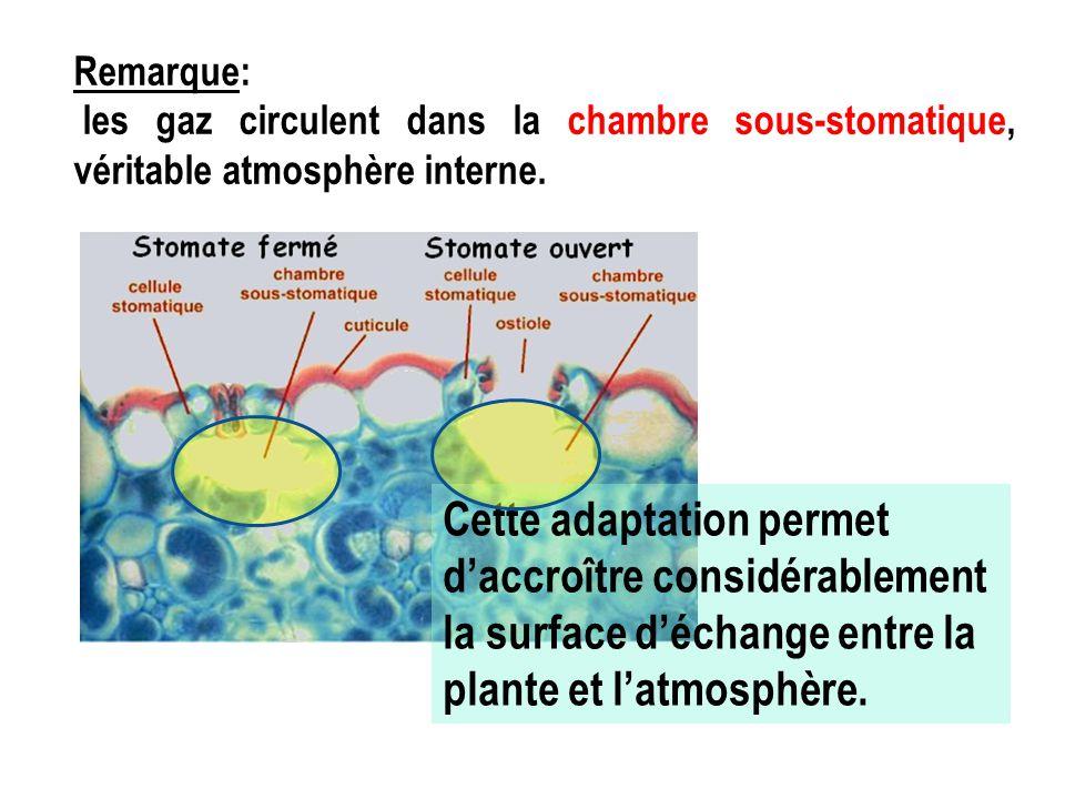 Énergie lumineuse StomatesCuticule Cellules chlorophylliennes Limitation des pertes en eau Photosynthèse ●Echanges gazeux avec l'atmosphère ● limitation des pertes en eau CO 2 H20H20H20H20 O2O2