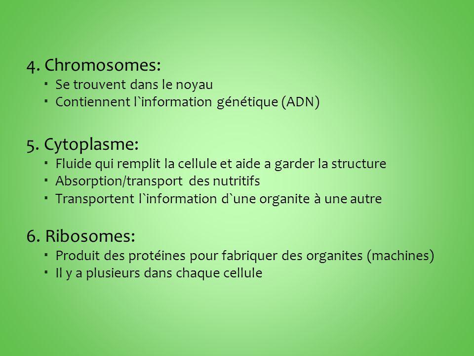4.Chromosomes:  Se trouvent dans le noyau  Contiennent l`information génétique (ADN) 5.