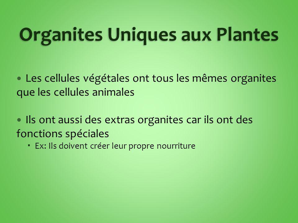 Les cellules végétales ont tous les mêmes organites que les cellules animales Ils ont aussi des extras organites car ils ont des fonctions spéciales  Ex: Ils doivent créer leur propre nourriture
