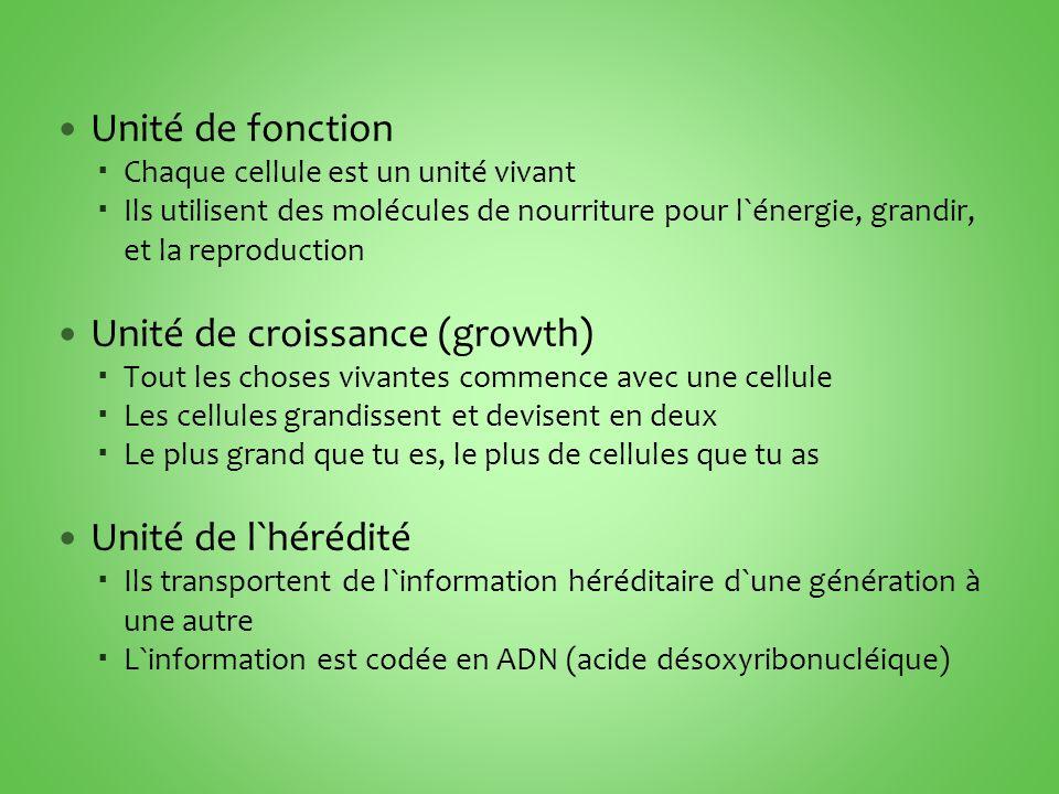 Unité de fonction  Chaque cellule est un unité vivant  Ils utilisent des molécules de nourriture pour l`énergie, grandir, et la reproduction Unité de croissance (growth)  Tout les choses vivantes commence avec une cellule  Les cellules grandissent et devisent en deux  Le plus grand que tu es, le plus de cellules que tu as Unité de l`hérédité  Ils transportent de l`information héréditaire d`une génération à une autre  L`information est codée en ADN (acide désoxyribonucléique)