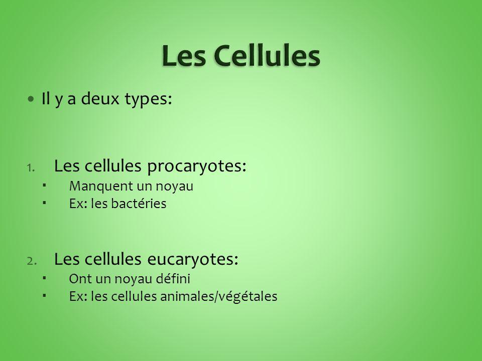 Il y a deux types: 1.Les cellules procaryotes:  Manquent un noyau  Ex: les bactéries 2.