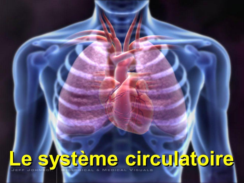 3 composantes principales du système circulatoire 1. Vaisseaux2. Sang 3. Pompe