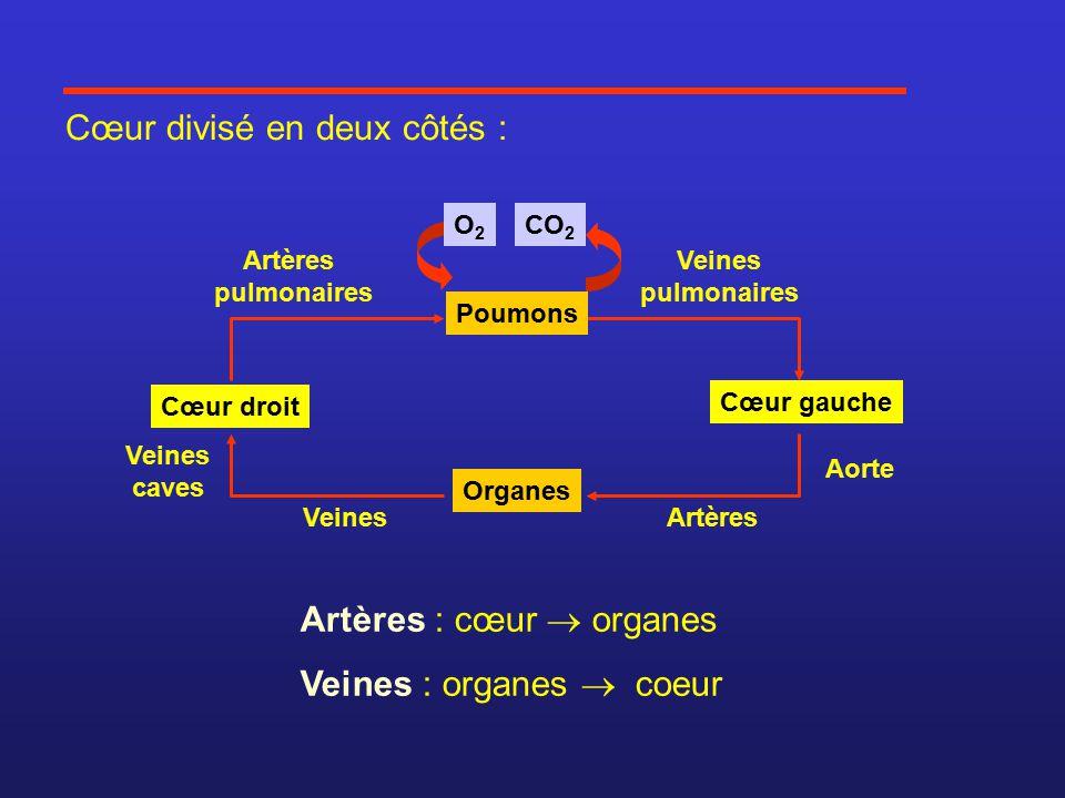 Cœur divisé en deux côtés : Artères : cœur  organes Veines : organes  coeur Cœur gauche Cœur droit Organes CO 2 Poumons O2O2 Artères pulmonaires Veines pulmonaires Aorte ArtèresVeines Veines caves