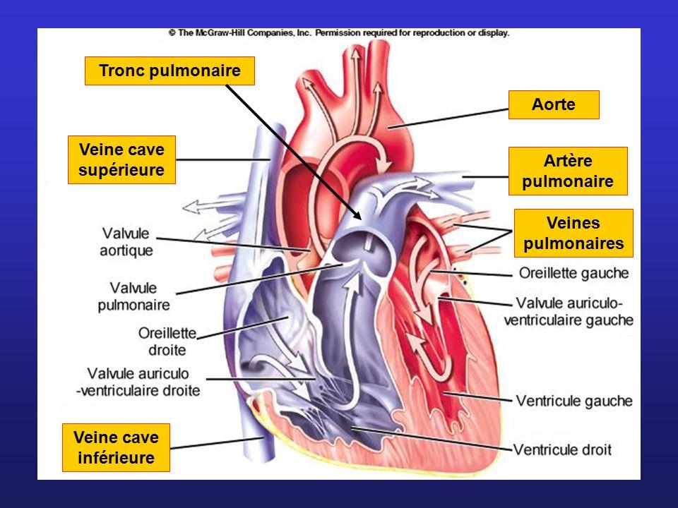 Veine cave supérieure Veine cave inférieure Aorte Veines pulmonaires Artère pulmonaire Tronc pulmonaire