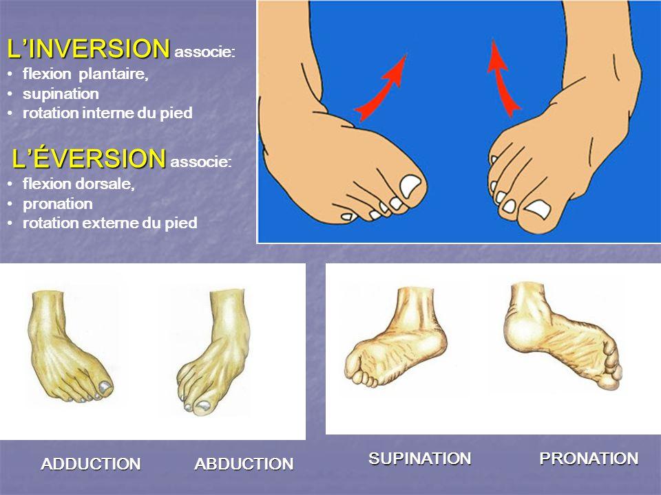 L'INVERSION L'INVERSION associe: flexion plantaire, supination rotation interne du pied L'ÉVERSION L'ÉVERSION associe: flexion dorsale, pronation rotation externe du pied SUPINATION PRONATION ADDUCTION ABDUCTION