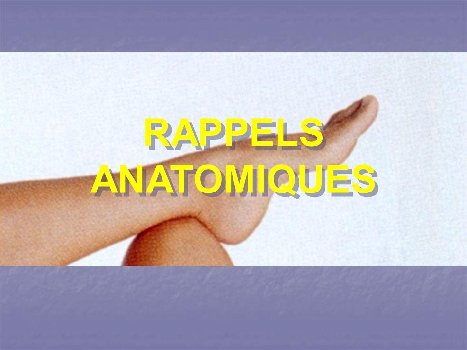 C est l articulation qui réunit les deux os de la jambe, au talus qui est un os court du pied et qui forme le sommet de la voûte tarsienne.