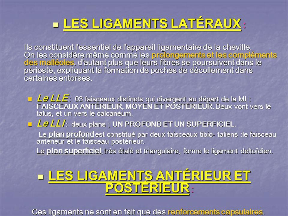 LES LIGAMENTS LATÉRAUX : LES LIGAMENTS LATÉRAUX : Ils constituent l essentiel de l appareil ligamentaire de la cheville.
