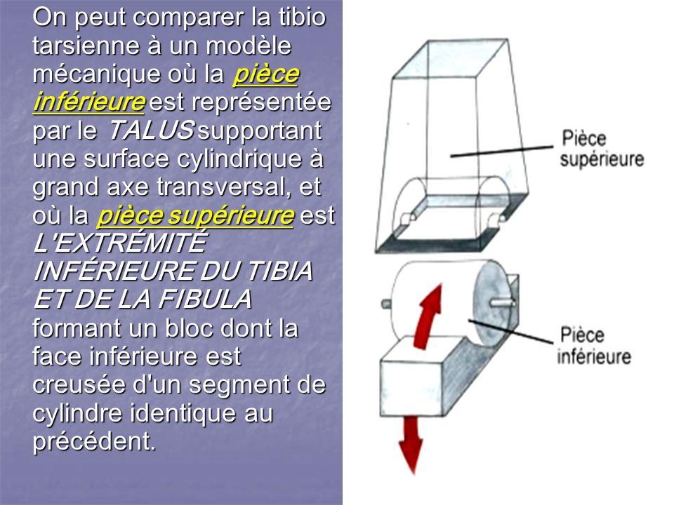 RAPPEL BIOMÉCANIQUE La cheville est une articulation fortement emboîtée n autorisant qu un seul mouvement de liberté dans le plan sagittal ; elle est couplée fonctionnellement au complexe articulaire de l arrière pied.