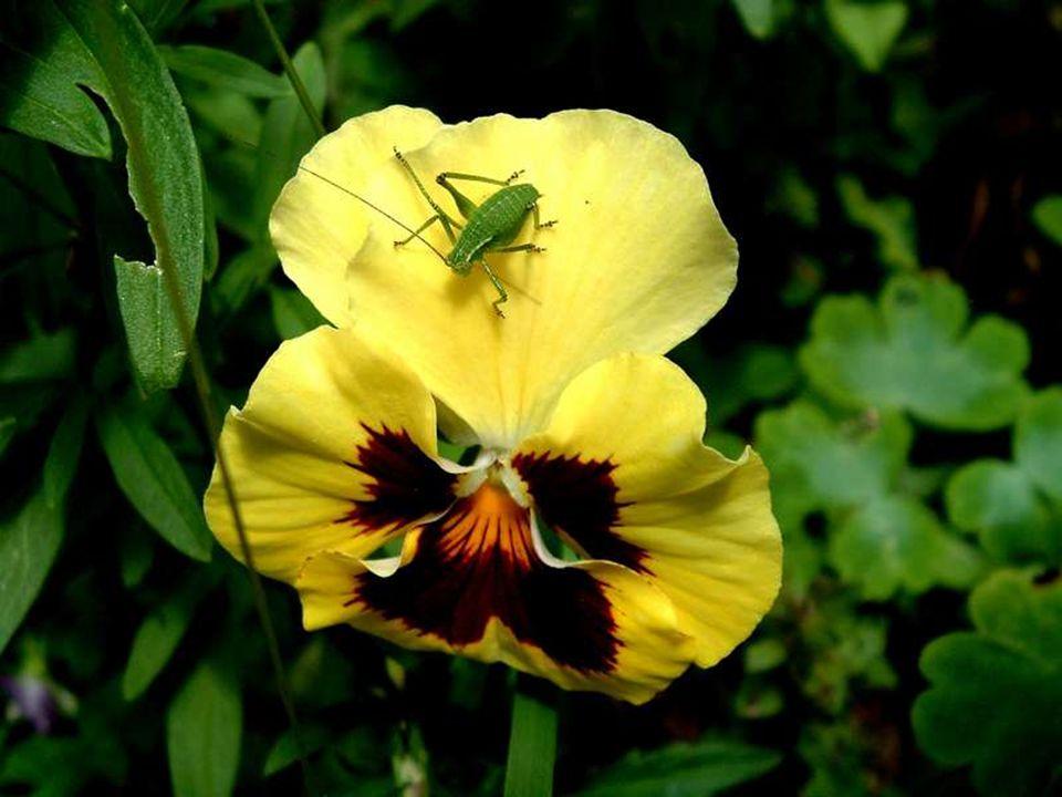 Quelques fleurs pour te souhaiter le meilleur, des sourires et beaucoup de surprises
