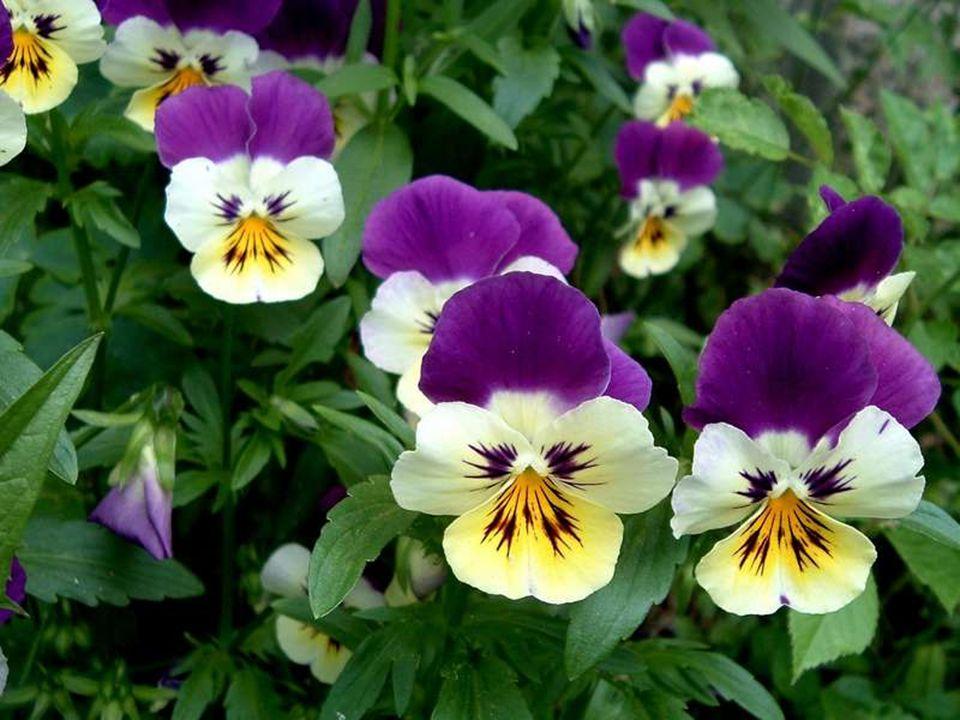 Des fleurs naturelles et des couleurs pour bien profiter de ta journée !