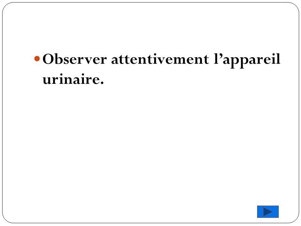Observer attentivement l'appareil urinaire.