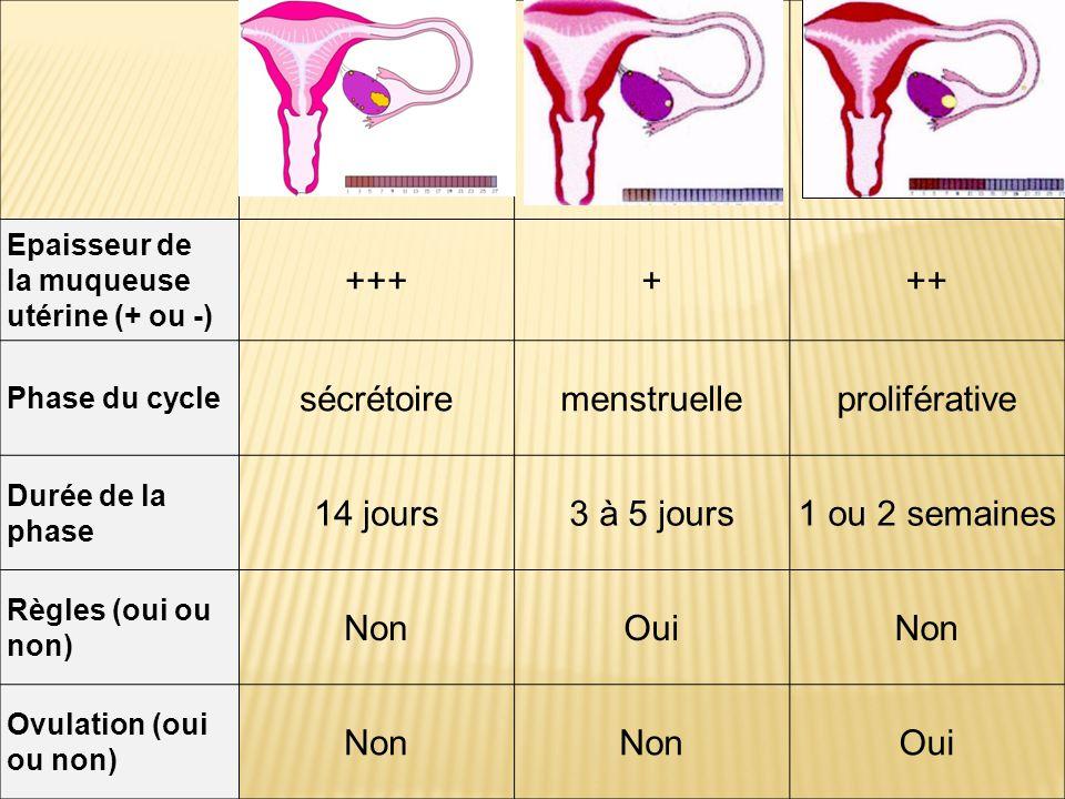 Epaisseur de la muqueuse utérine (+ ou -) ++++++ Phase du cycle sécrétoiremenstruelleproliférative Durée de la phase 14 jours3 à 5 jours1 ou 2 semaine