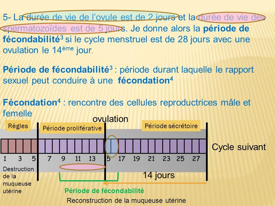 5- La durée de vie de l'ovule est de 2 jours et la durée de vie des spermatozoïdes est de 5 jours. Je donne alors la période de fécondabilité 3 si le