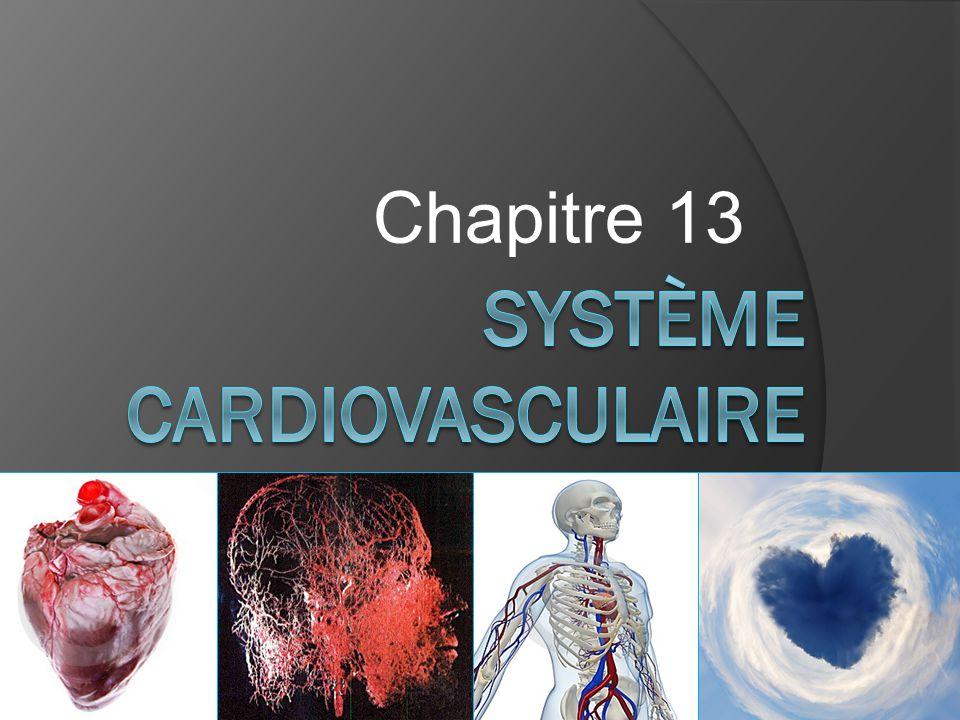 3.Le cœur 3.1 Définition :  Le cœur est l'organe qui permet la propulsion du sang.