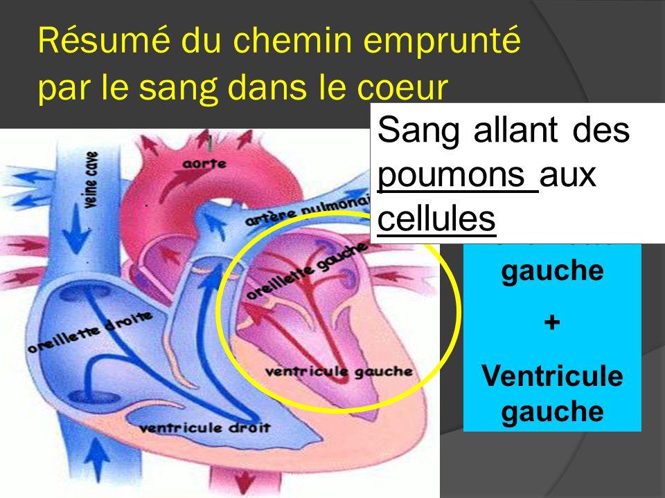 Résumé du chemin emprunté par le sang dans le coeur Oreillette gauche + Ventricule gauche Sang allant des poumons aux cellules