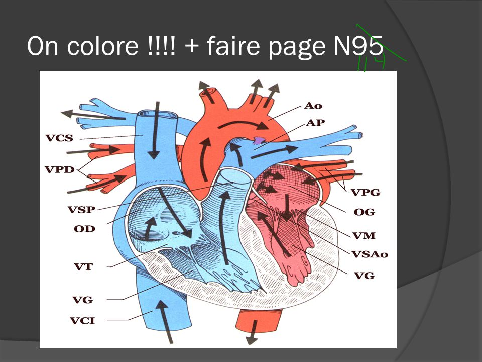 On colore !!!! + faire page N95