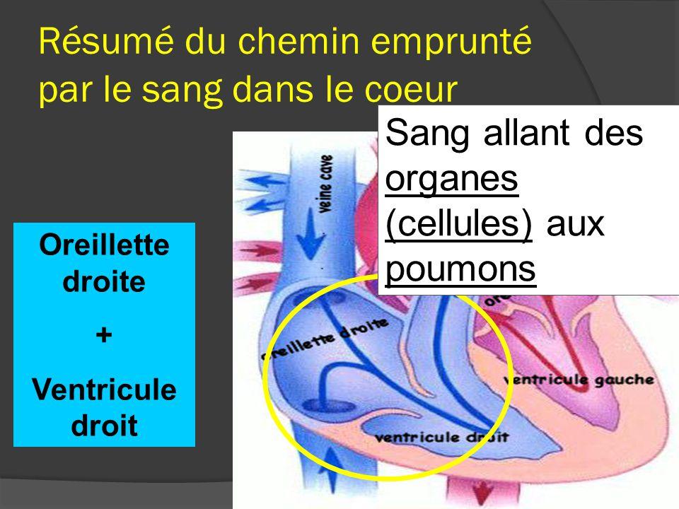 1- Le sang venant de tous les organes arrive par la veine cave supérieure et inférieure (sang riche en CO 2 ) 1 1 A.
