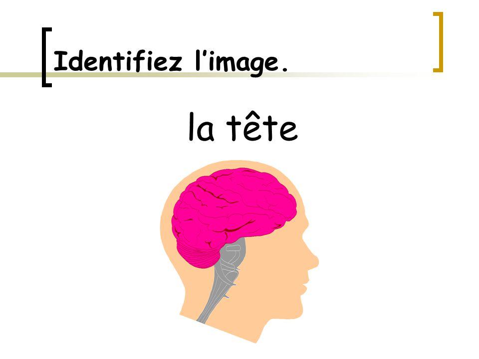 Identifiez l'image. la tête
