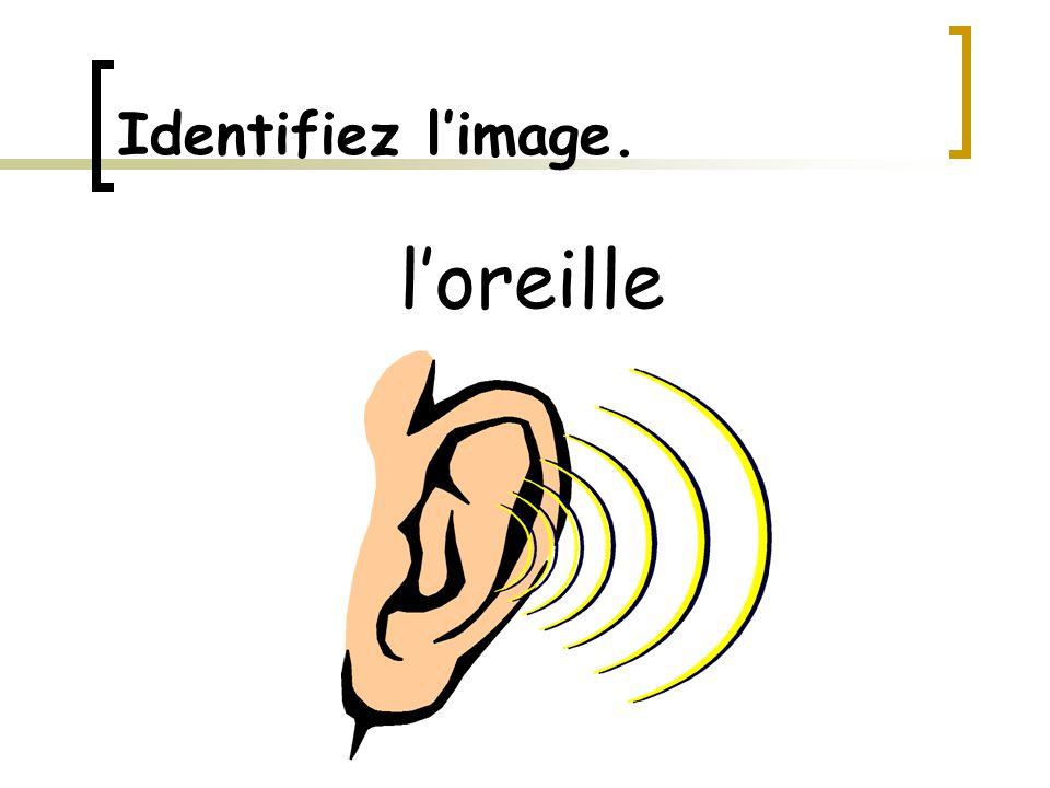Identifiez l'image. l'oreille